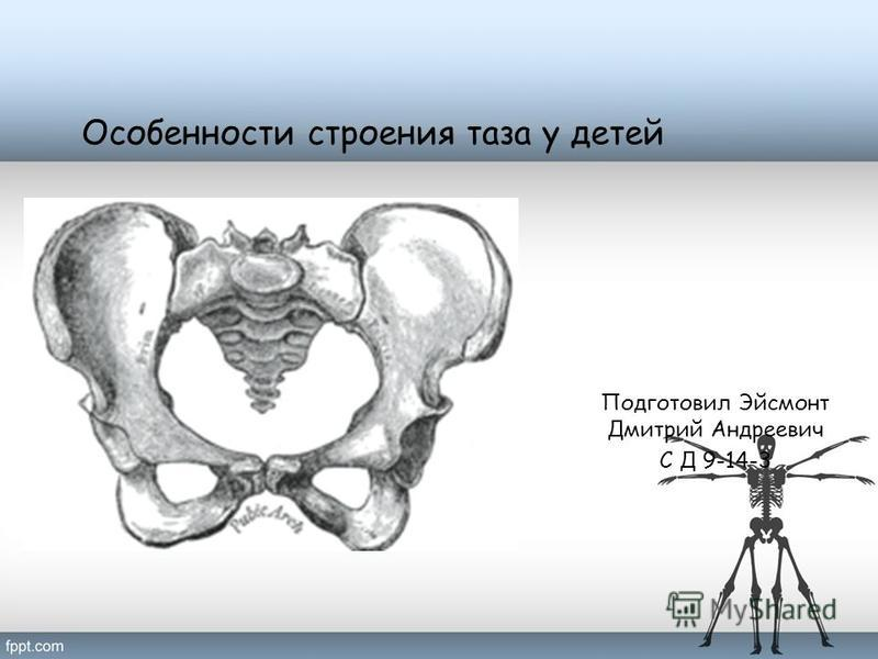 Особенности строения таза у детей Подготовил Эйсмонт Дмитрий Андреевич С Д 9-14-3