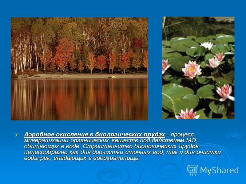 Аэробное окисление в биологических прудах - процесс минерализации органических веществ под действием МО, обитающих в воде. Строительство биологических прудов целесообразно как для доочистки сточных вод, так и для очистки воды рек, впадающих в водохра