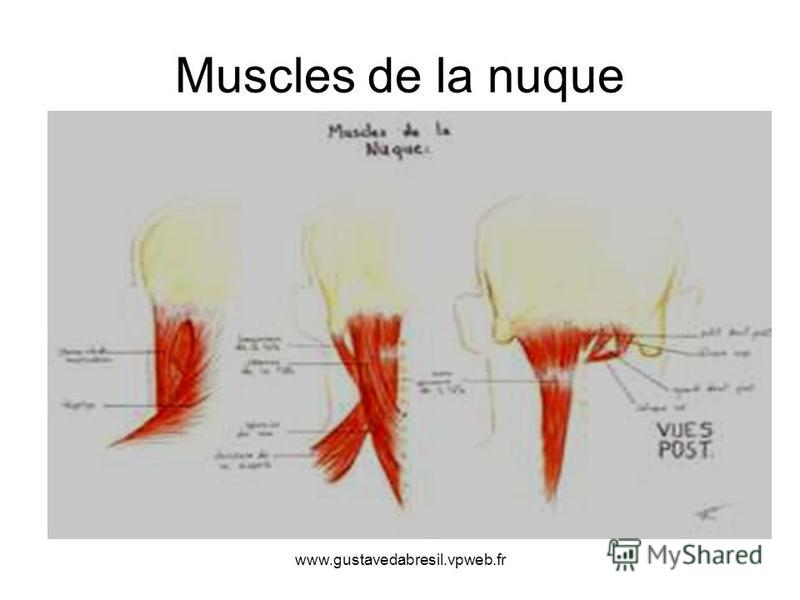 www.gustavedabresil.vpweb.fr Muscles de la nuque