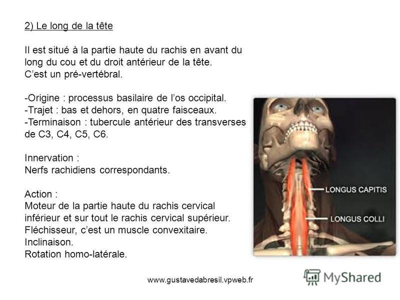 www.gustavedabresil.vpweb.fr 2) Le long de la tête Il est situé à la partie haute du rachis en avant du long du cou et du droit antérieur de la tête. Cest un pré-vertébral. -Origine : processus basilaire de los occipital. -Trajet : bas et dehors, en