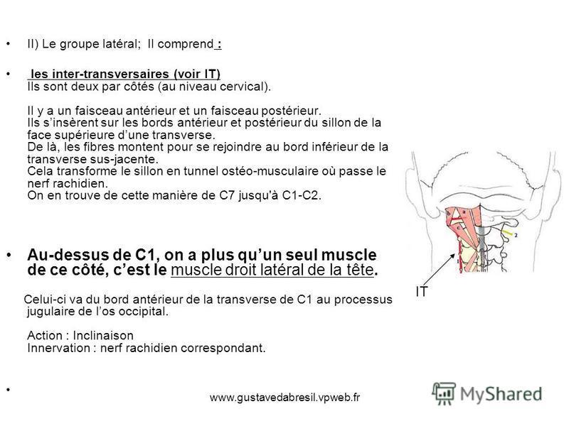 www.gustavedabresil.vpweb.fr II) Le groupe latéral; Il comprend : les inter-transversaires (voir IT) Ils sont deux par côtés (au niveau cervical). Il y a un faisceau antérieur et un faisceau postérieur. Ils sinsèrent sur les bords antérieur et postér