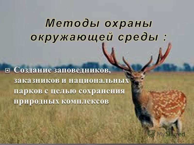 Создание заповедников, заказников и национальных парков с целью сохранения природных комплексов Создание заповедников, заказников и национальных парков с целью сохранения природных комплексов