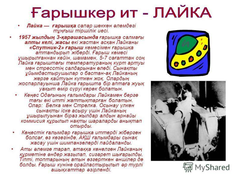 Лайка ғббббббббарышқа сапер шеккен әлемдегі тұңғыш тіршілік иесі. 1957 жылдың 3-қарашасында ғббббббббарышқа салмағы ялты келі, ужасы екі жастан асқан Лайканы «Спутник-2» ғббббббббарыш кемесімен ғббббббббарышқа аттандырып жіберді. Ғббббббббарыш кемесі