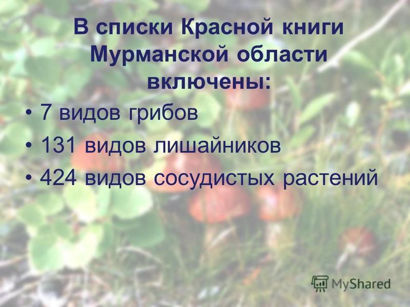 В списки Красной книги Мурманской области включены: 7 видов грибов 131 видов лишайников 424 видов сосудистых растении