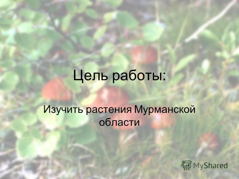 Цель работы: Изучить растения Мурманской области