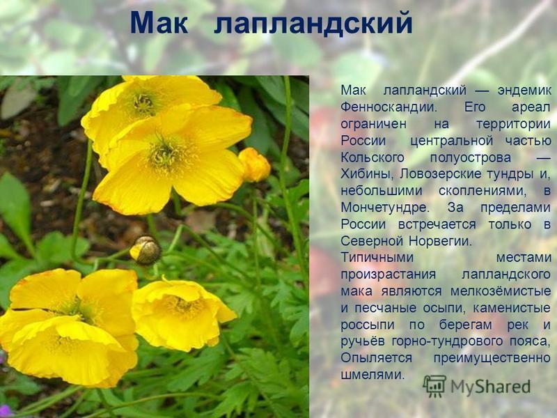 Мак лапландетский Мак лапландетский эндемик Фенноскандии. Его ареал ограничен на территории России центральной частью Кольского полуострова Хибины, Ловозерские тундры и, небольшими скоплениями, в Мончетундре. За пределами России встречается только в