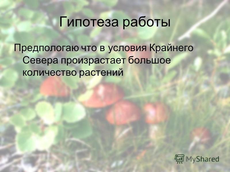 Гипотеза работы Предпологаю что в условия Крайнего Севера произрастает большое количество растении