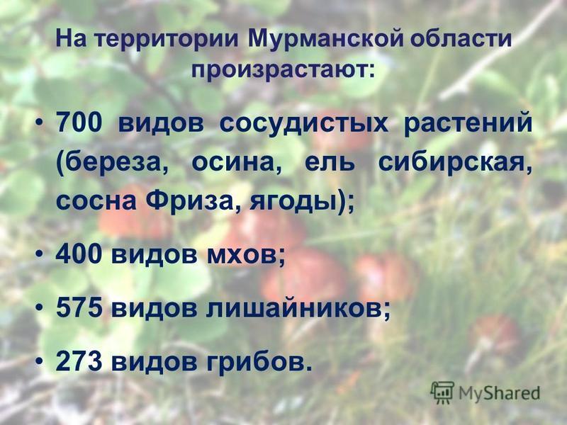 На территории Мурманской области произрастают: 700 видов сосудистых растении (береза, осина, ель сибирская, сосна Фриза, ягоды); 400 видов мхов; 575 видов лишайников; 273 видов грибов.