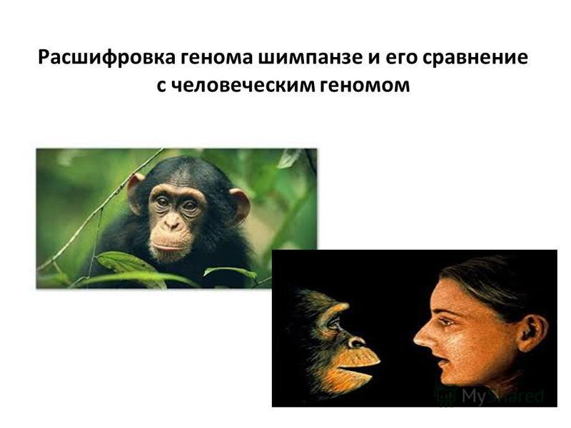 Расшифровка генома шимпанзе и его сравнение с человеческим геномом