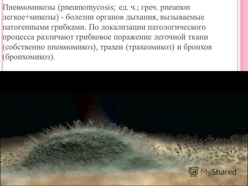 Пневмомикозы (pneumomycosis; ед. ч.; греч. pneumon легкое+микозы) - болезни органов дыхания, вызываемые патогенными грибками. По локализации патологического процесса различают грибковое поражение легочной ткани (собственно пневмомикоз), трахеи (трахе