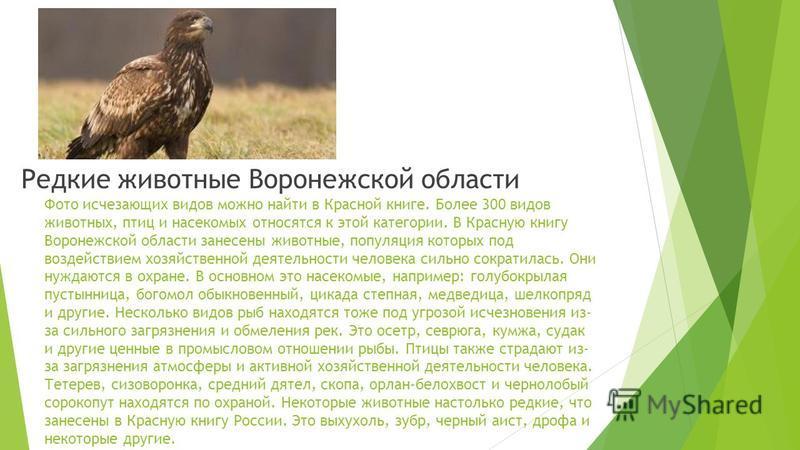 Животные Воронежской области Описание природы края очень интересно. Больше 400 видов животных встречается на этой территории. Среди них много как повсеместно распространенных, так и редких. И бережного отношения и охраны заслуживают все они. Комфортн