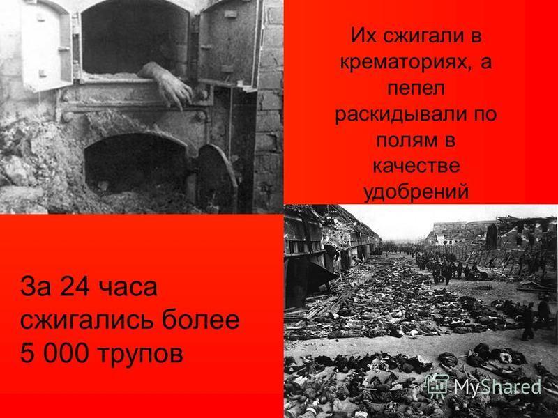 Их сжигали в крематориях, а пепел раскидывали по полям в качестве удобрений За 24 часа сжигались более 5 000 трупов