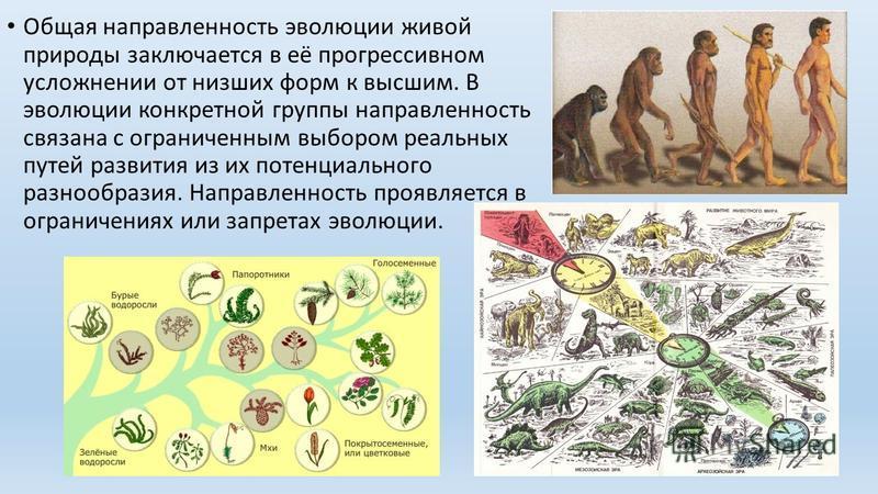 Общая направленность эволюции живой природы заключается в её прогрессивном усложнении от низших форм к высшим. В эволюции конкретной группы направленность связана с ограниченным выбором реальных путей развития из их потенциального разнообразия. Напра