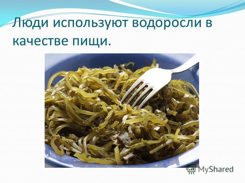 Люди используют водоросли в качестве пищи.