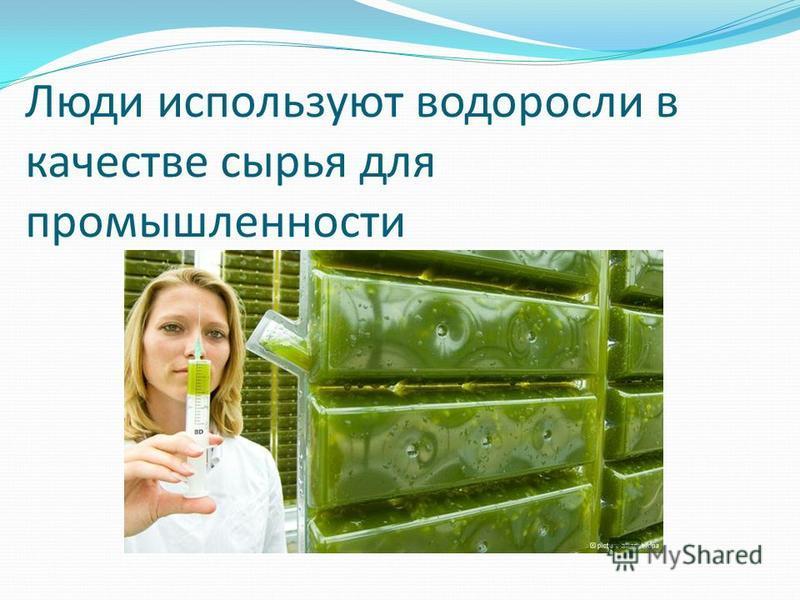 Люди используют водоросли в качестве сырья для промышленности