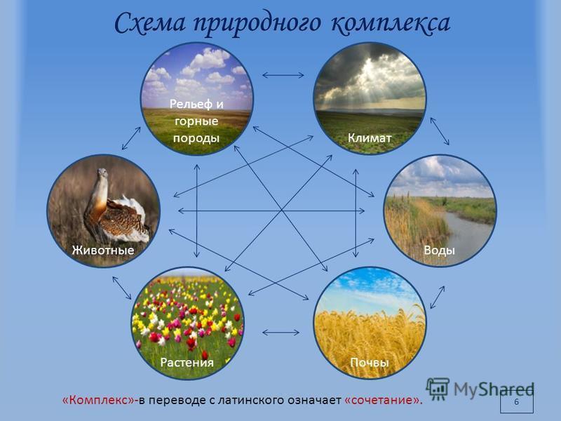6 «Комплекс»-в переводе с латинского означает «сочетание». Рельеф и горные породы Климат Воды Почвы Растения Животные