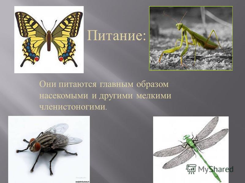 Питание : Они питаются главным образом насекомыми и другими мелкими членистоногими.