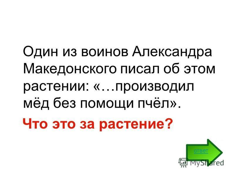 Один из воинов Александра Македонского писал об этом растении: «…производил мёд без помощи пчёл». Что это за растение? ответ