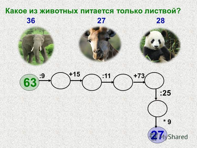 :9 +15 +73:11 * 9 :25 63 Какое из животных питается только листвой? 362728 27