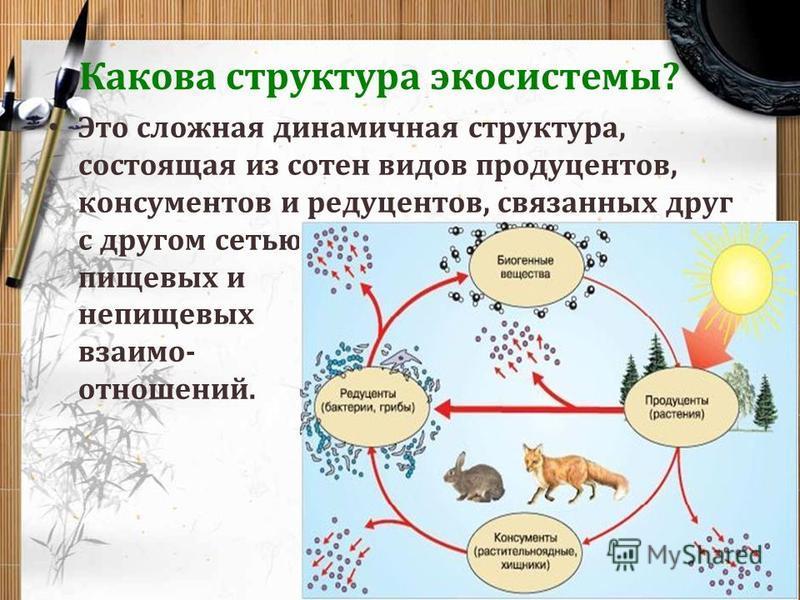 Какова структура экосистемы? Это сложная динамичная структура, состоящая из сотен видов продуцентов, консументов и редуцентов, связанных друг с другом сетью пищевых и непищевых взаимоотношений.