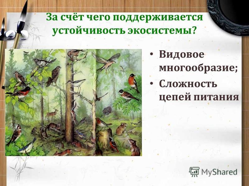 За счёт чего поддерживается устойчивость экосистемы? Видовое многообразие; Сложность цепей питания
