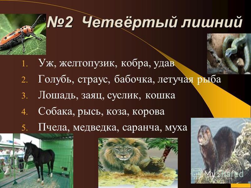 2 Четвёртый лишний 1. Уж, желтопузик, кобра, удав 2. Голубь, страус, бабочка, летучая рыба 3. Лошадь, заяц, суслик, кошка 4. Собака, рысь, коза, корова 5. Пчела, медведка, саранча, муха