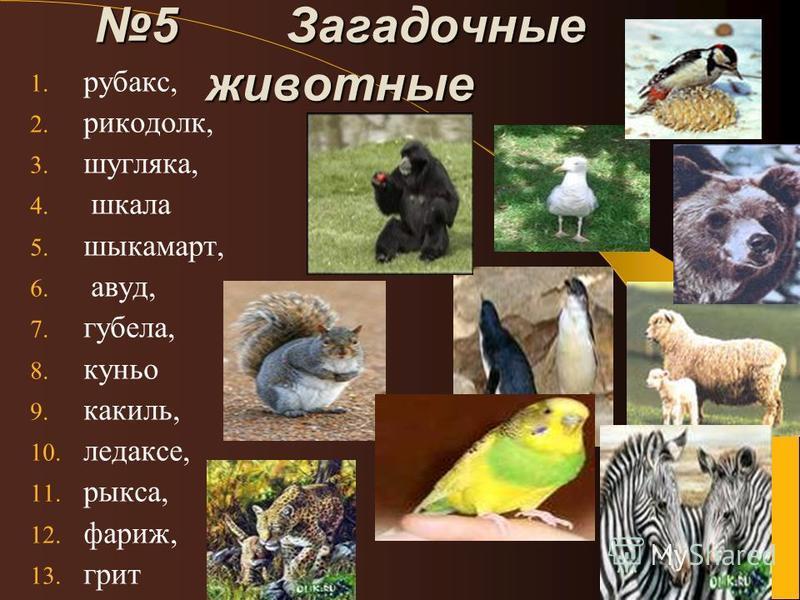 5 Загадочные животные 1. рубаки, 2. рикодолк, 3. шугляка, 4. шкала 5. шыкамарт, 6. авуд, 7. губила, 8. кунье 9. кокиль, 10. ледаксе, 11. рикса, 12. париж, 13. крит