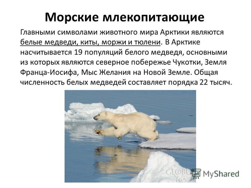Морские млекопитающие Главными символами животного мира Арктики являются белые медведи, киты, моржи и тюлени. В Арктике насчитывается 19 популяций белого медведя, основными из которых являются северное побережье Чукотки, Земля Франца-Иосифа, Мыс Жела