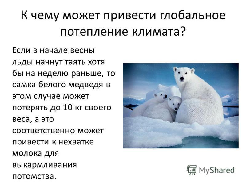 К чему может привести глобальное потепление климата? Если в начале весны льды начнут таять хотя бы на неделю раньше, то самка белого медведя в этом случае может потерять до 10 кг своего веса, а это соответственно может привести к нехватке молока для
