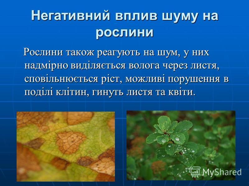 Негативний вплив шуму на рослини Рослини також реагують на шум, у них надмірно виділяється волога через листя, сповільнюється ріст, можливі порушення в поділі клітин, гинуть листя та квіти. Рослини також реагують на шум, у них надмірно виділяється во