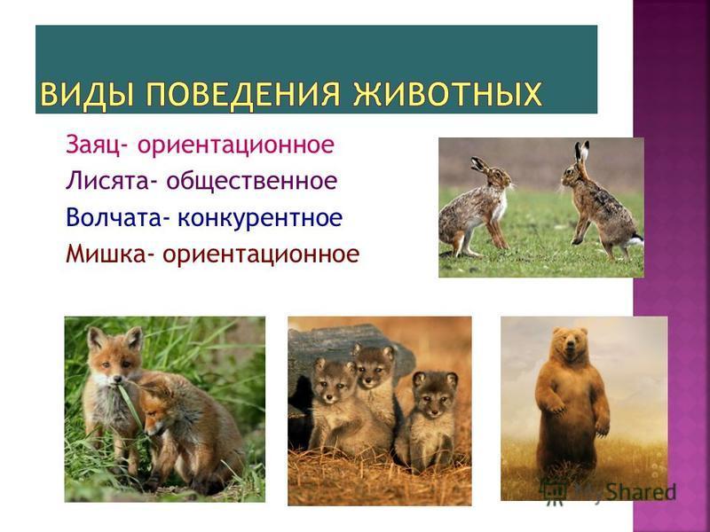 Заяц- ориентационное Лисята- общественное Волчата- конкурентное Мишка- ориентационное