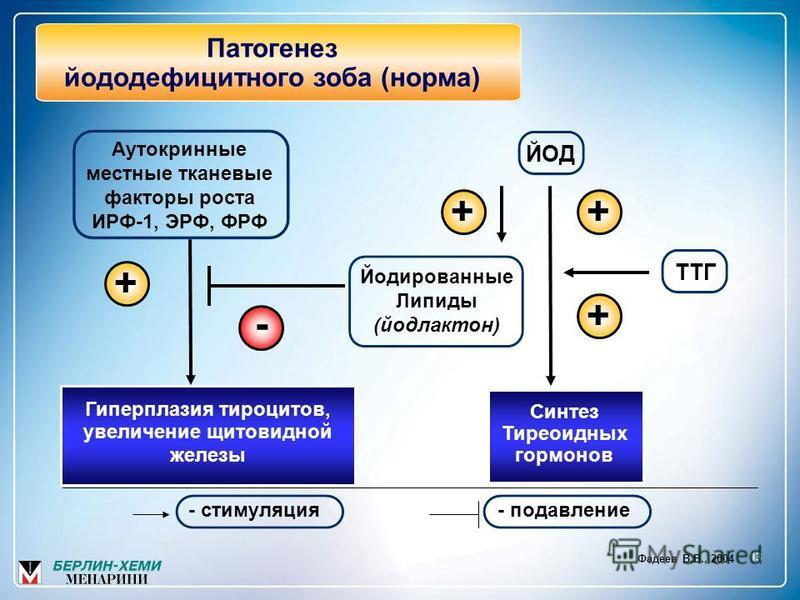 13 Патогенез йоддефицитного зоба (норма) - стимуляция- подавление Фадеев В.В., 2004 Аутокринные местные тканевые факторы роста ИРФ-1, ЭРФ, ФРФ Йодированные Липиды (йодлактон) Синтез Тиреоидных гормонов Гиперплазия тироцитов, увеличение щитовидной жел