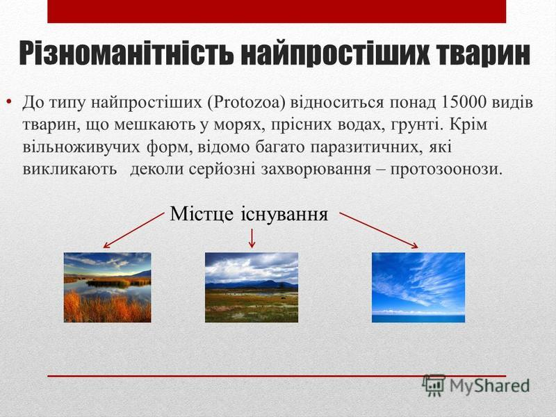 Паразитичні одноклітинні тварини Створив Донець О.