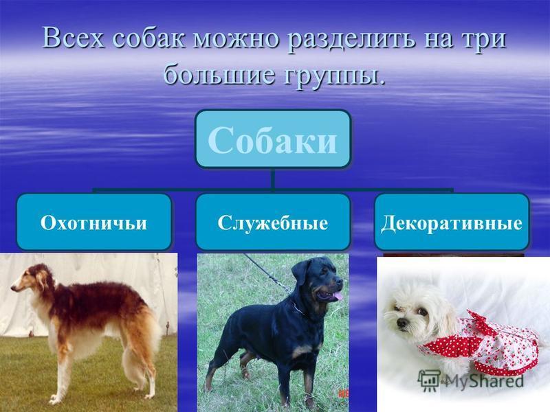 Всех собак можно разделить на три большие группы. Собаки Охотничьи СлужебныеДекоративные