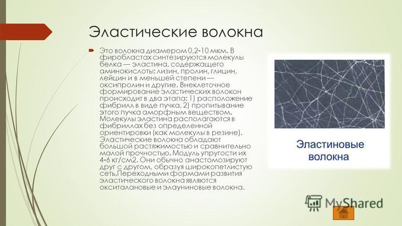 Эластические волокна Это волокна диаметром 0,2-10 мкм. В фибробластах синтезируются молекулы белка эластина, содержащего аминокислоты: лизин, пролин, глицин, лейцин и в меньшей степени оксипролин и другие. Внеклеточное формирование эластических волок