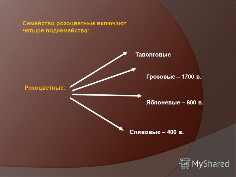 Семейство розоцветные включают четыре подсемейства: Розоцветные: Таволговые Грозовые – 1700 в. Яблоневые – 600 в. Сливовые – 400 в.