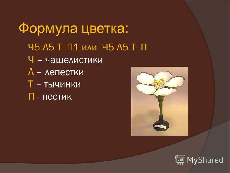 Ч5 Л5 Т- П1 или Ч5 Л5 Т- П - Ч – чашелистики Л – лепестки Т – тычинки П - пестик Формула цветка: