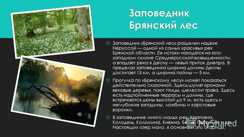 Заповедник Брянский лес Заповедник «Брянский лес» разделен надвое Неруссой одной из самых красивых рек Брянской области. Ее истоки находятся на юго- западном склоне Среднерусской возвышенности, а впадает река в Десну левый приток Днепра. В пределах з