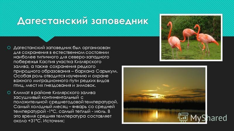 Дагестанский заповедник Дагестанский заповедник был организован для сохранения в естественном состоянии наиболее типичного для северо-западного побережья Каспия участка Кизлярского залива, а также сохранения редкого природного образования – бархана С