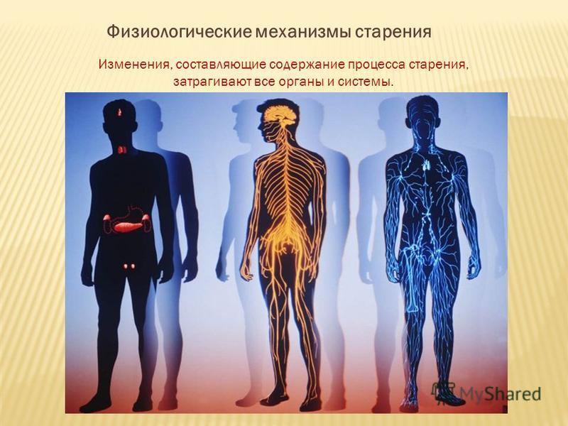 Физиологические механизмы старения Изменения, составляющие содержание процесса старения, затрагивают все органы и системы.