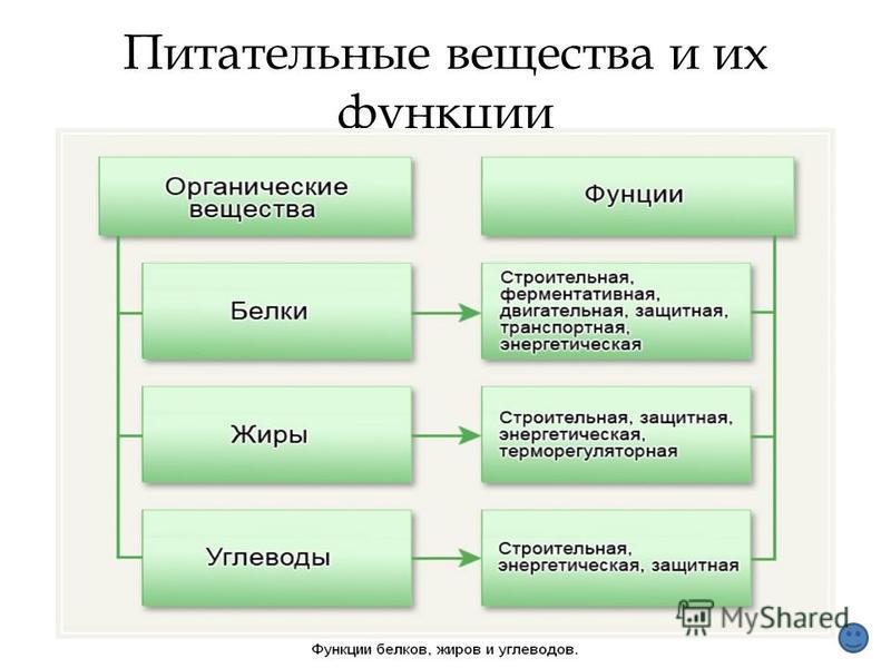 Питательные вещества и их функции