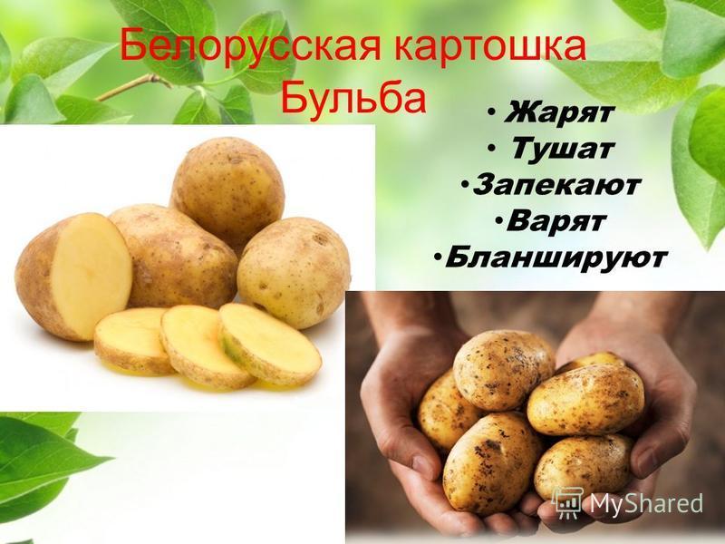 Белорусская картошка Бульба Жарят Тушат Запекают Варят Бланшируют