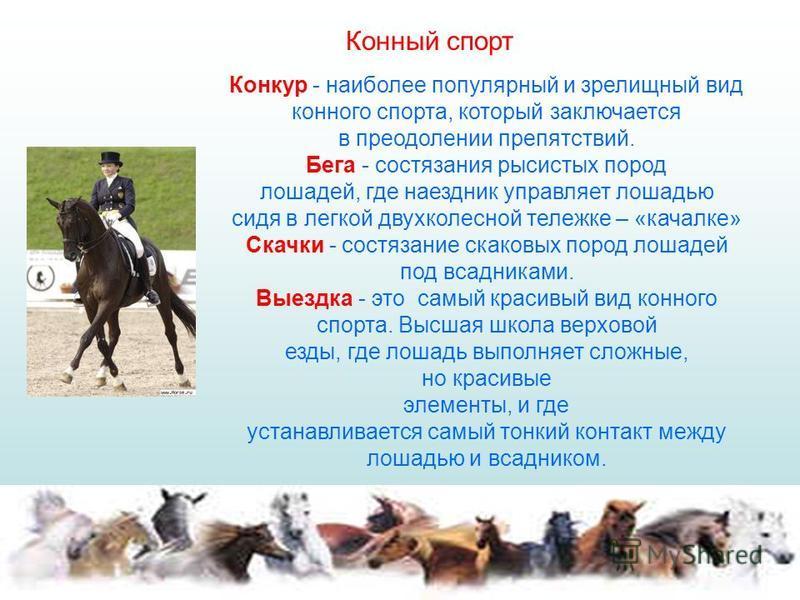 Конкур - наиболее популярный и зрелищный вид конного спорта, который заключается в преодолении препятствий. Бега - состязания рысистых пород лошадей, где наездник управляет лошадью сидя в легкой двухколесной тележке – «качалке» Скачки - состязание ск
