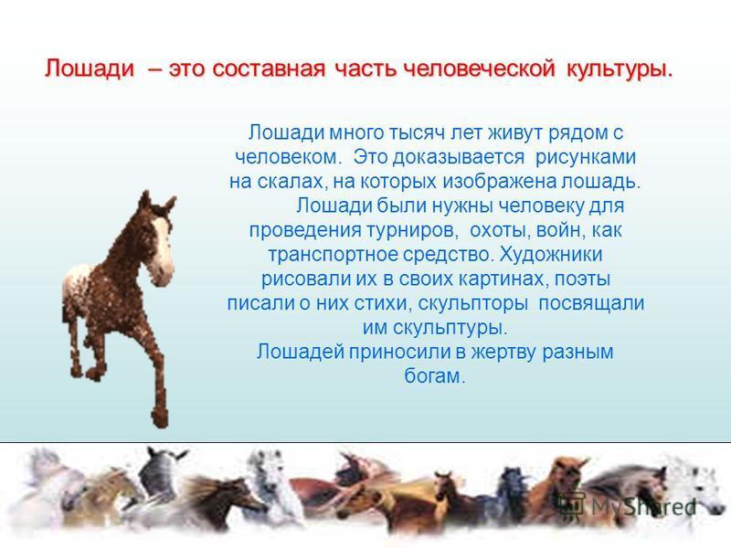 Лошади – это составная часть человеческой культуры. Лошади много тысяч лет живут рядом с человеком. Это доказывается рисунками на скалах, на которых изображена лошадь. Лошади были нужны человеку для проведения турниров, охоты, войн, как транспортное