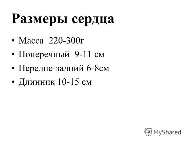 Размеры сердца Масса 220-300 г Поперечный 9-11 см Передне-задний 6-8 см Длинник 10-15 см