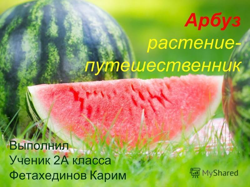 Арбуз растение- путешественник Выполнил Ученик 2А класса Фетахединов Карим