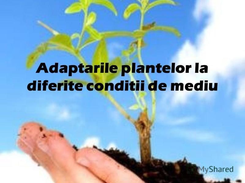 Adaptarile plantelor la diferite conditii de mediu