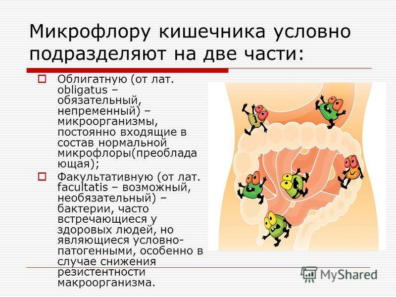 Микрофлору кишечника условно подразделяют на две части: Облигатную (от лат. obligatus – обязательный, непременный) – микроорганизмы, постоянно входящие в состав нормальной микрофлоры(преобладающая); Факультативную (от лат. facultatis – возможный, нео