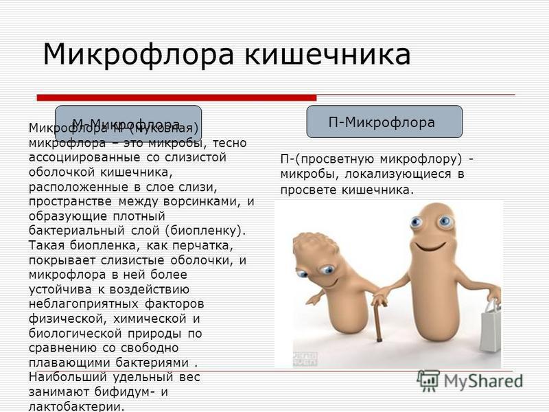 Микрофлора кишечника М-Микрофлора П-Микрофлора Микрофлора М-(мукозная) микрофлора – это микробы, тесно ассоциированные со слизистой оболочкой кишечника, расположенные в слое слизи, пространстве между ворсинками, и образующие плотный бактериальный сло