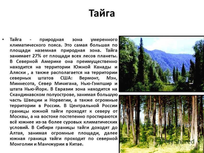 Тайга Тайга - природная изона умеренного климатического пояса. Это самая большая по площади наземная природная изона. Тайга занимает 27% от площади всех лесов планеты. В Северной Америке она преимущественно находится на территории Южной Канады и Аляс